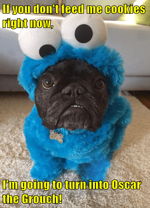 costume dogs Cookie Monster halloween - 8346103296