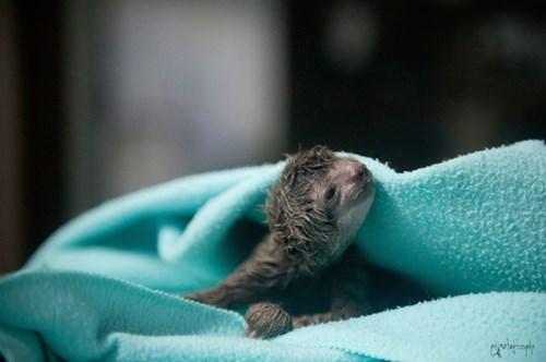 cute sloth - 8346291712