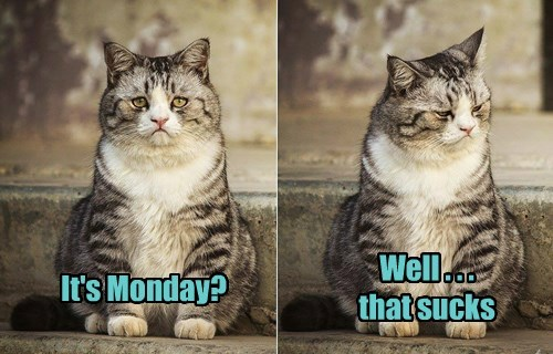 Cats monday work sucks - 8346294528