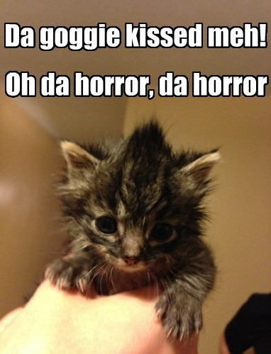 Cats dogs horror KISS - 8346349056