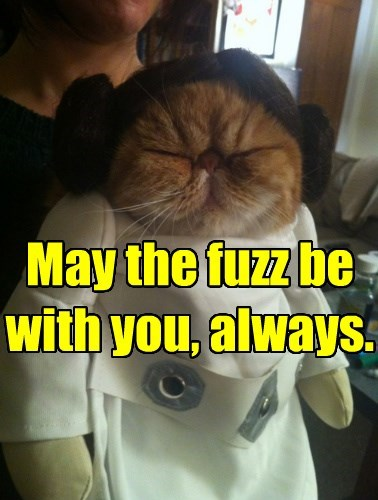 Cats,the force,star wars,Princess Leia