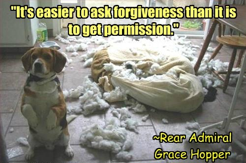 cute dogs destruction forgiveness - 8346539264