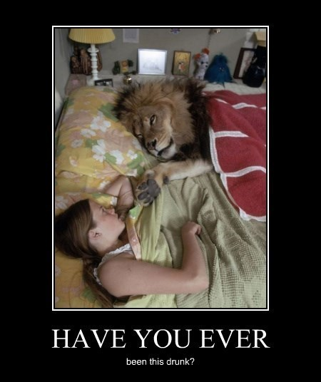memes drunk funny passed out lion wtf - 8346587392