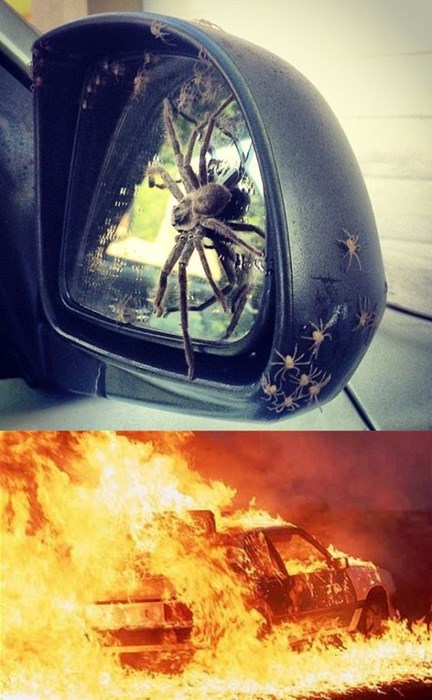 cars,Kill It With Fire,spiders,fail nation
