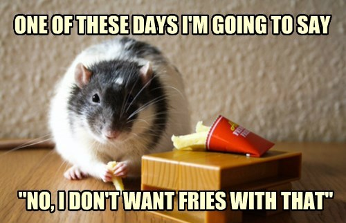 fries,hamster,resolution