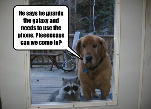 dogs,rocket raccoon,raccoon,groot,gaurdians of the galaxy
