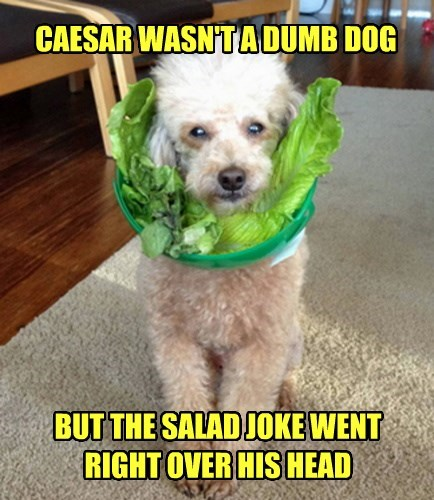 CAESAR WASN'T A DUMB DOG BUT THE SALAD JOKE WENT RIGHT OVER HIS HEAD