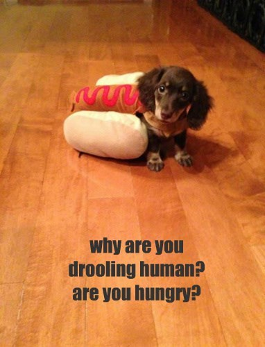 hot dog hungry dogs dachshund - 8347123968