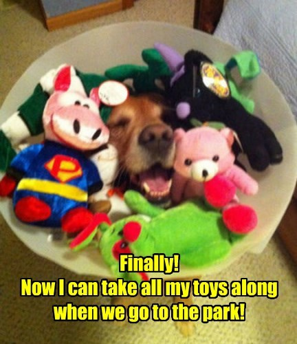 dogs,toys,cone of shame,golden retriever