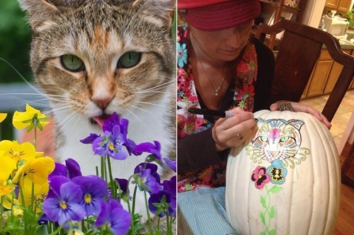 rainbow bridge,Day Of The Dead,pumpkins,Cats