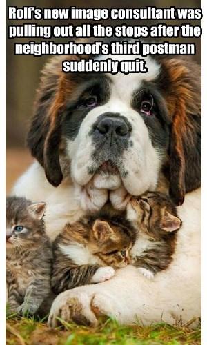 dogs,st bernard,kitten,image