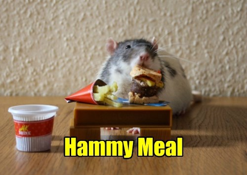 happy meal,tiny,hamster,food