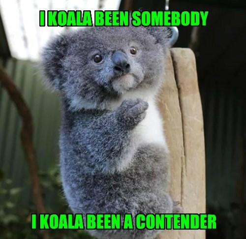 puns koala Marlon Brando - 8347313408