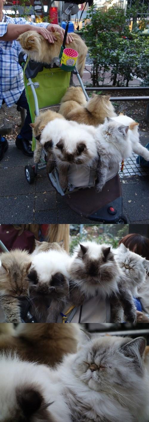 crazy cat lady news Cats - 8347319296