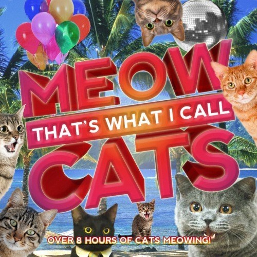 Music cds meow Cats - 8347368704