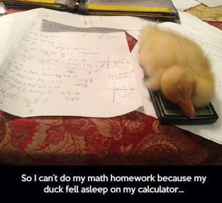 homework excuse wtf ducks funny - 8347464704