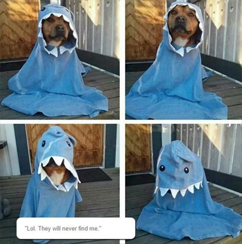 dogs ghosts hidden shark boxer
