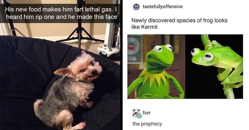 stupid memes twitter tumblr random memes dumb memes funny memes funny tweets - 8347653
