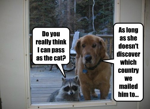 dogs raccoon Cats - 8347659520