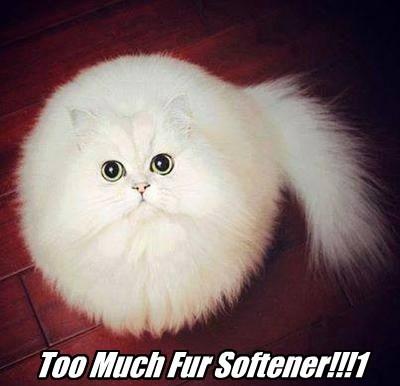 Fluffy soft Cats - 8347826944