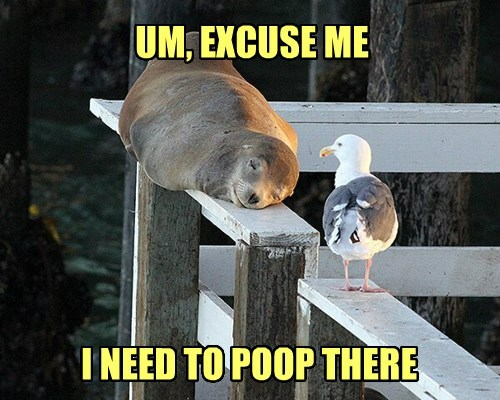 excuse me,poop,birds,seal
