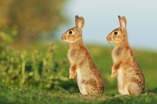 happy bunday cute twins bunny - 8348639232