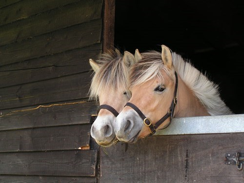 Let Us Out, We're Ready To Horse Around
