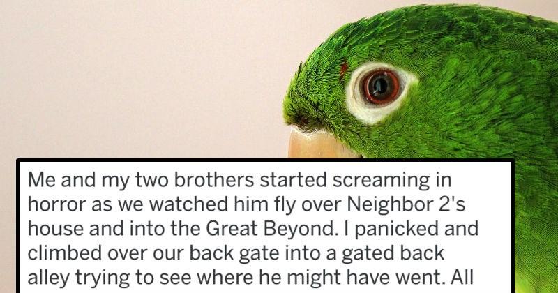 parakeet FAIL birds ridiculous funny - 8348677