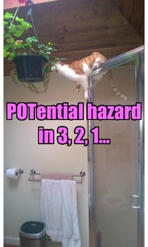 plants FAIL puns Cats - 8348698112