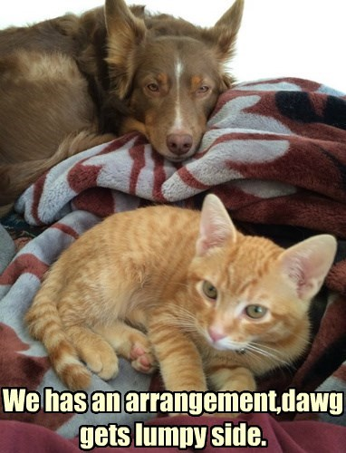 dogs,compromise,bed,Cats
