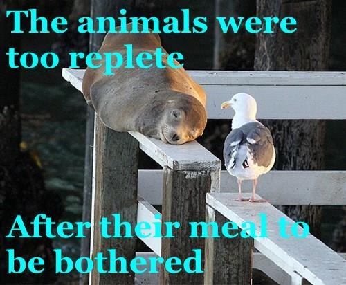animals - 8348746496