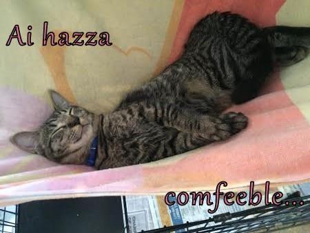 animals Cats sleeping comfortable - 8348756992