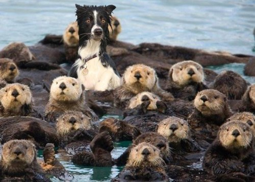 surprised,dogs,adopted,sea otter