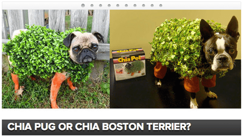 halloween costumes,dogs,halloween,quiz,playbuzz