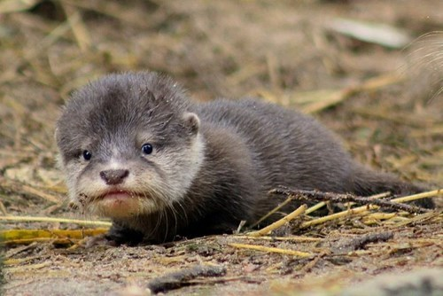 cute otter - 8348963072