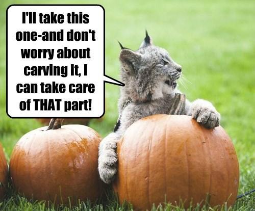 pumpkins halloween Cats - 8348974080