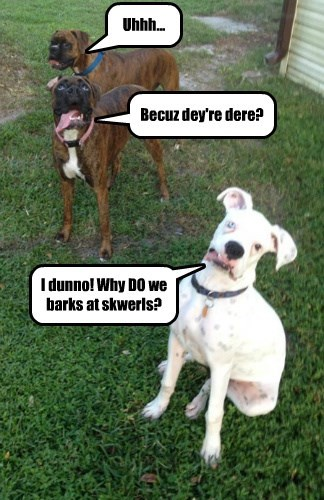 Uhhh... Becuz dey're dere? I dunno! Why DO we barks at skwerls?