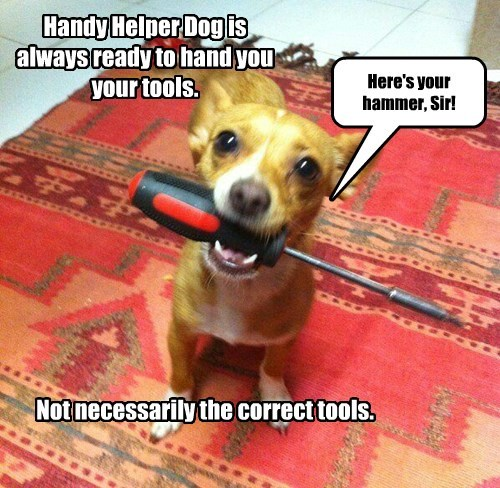 Handy Helper Dog is always ready to hand you your tools. Not necessarily the correct tools. Here's your hammer, Sir!