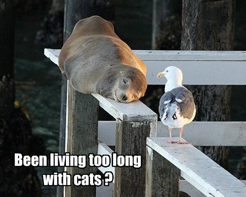 seal,monorail cat,seagull