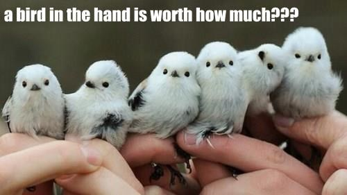 animals baby animals birds cute squee - 8349647616