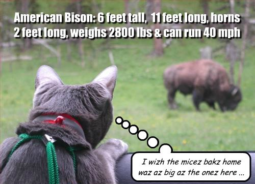 bison mice food Cats
