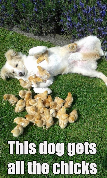 dogs,chicks,birds,ladies man
