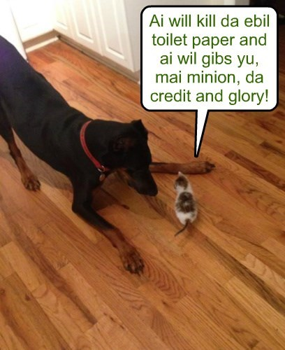 dogs,trickery,kitten,toilet paper,Cats