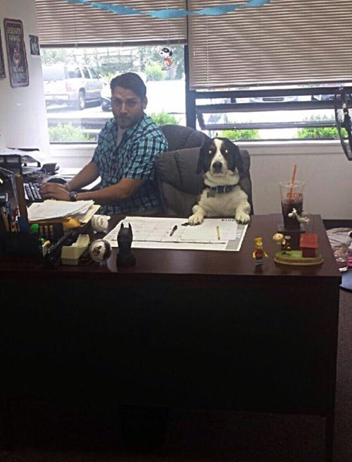 monday thru friday,dogs,desk