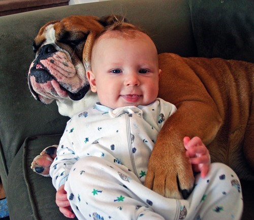 dogs,baby,bulldog,friends,cute,parenting