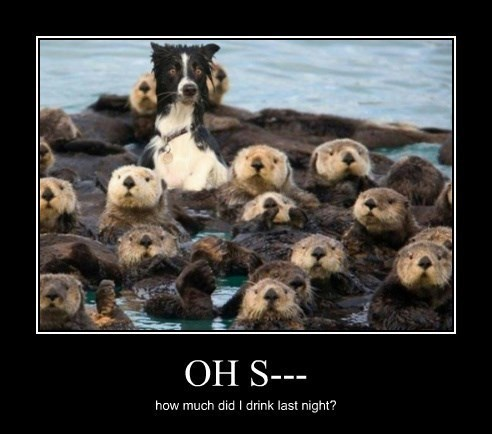 memes dogs drunk awesome otters funny - 8349920000
