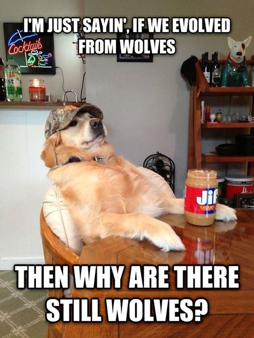 wolves,dogs,evolution,redneck retriever,rednecks