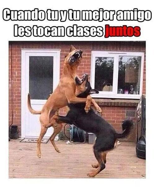 bromas perros Memes animales - 8350022400