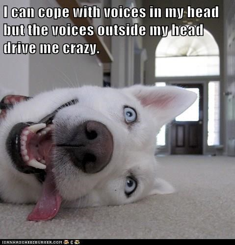 crazy,dogs,voices