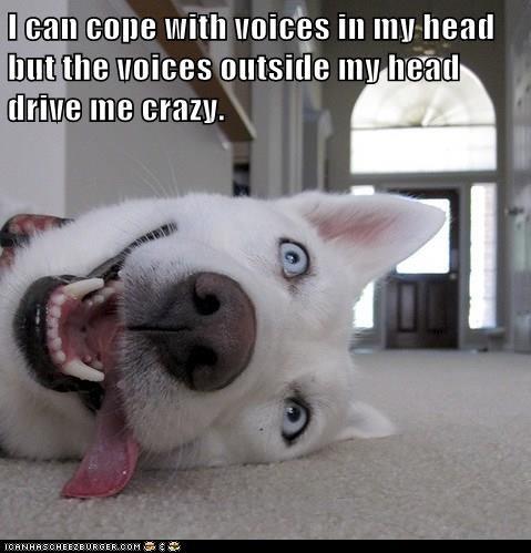 animals crazy dogs voices - 8350077696